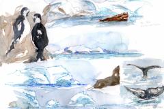 2020-11-Antarctique-Enterprise-Island-WCA-Copie