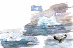2020-14-Antarctique-Plnacton-et-rorqual-WCA-Copie