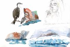 2020-18-Antarctique-Ekaterina-WCA-Copie