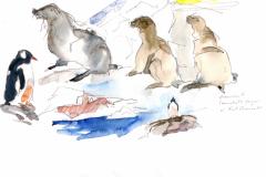 2020-26-Antarctique-Otarie-à-Fort-Charcot-WCA