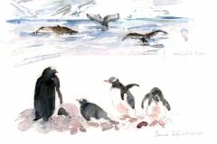 2020-30-Antarctique-Danco-WCA