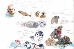 2020-39-Antarctique-les-Phoques-WCA