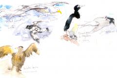 2020-42-Antarctique-les-oiseaux-WCA