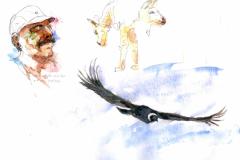 2020-12-Argentine-condor-WCA