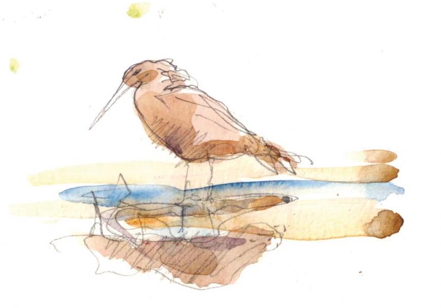 Ethiopie-lac-Ziwae-un-oiseau